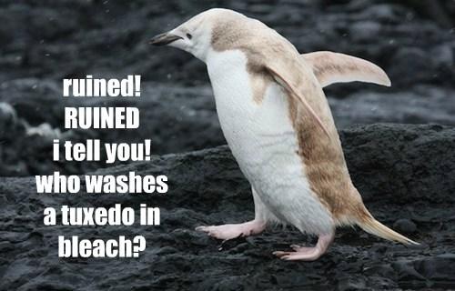ruined laundry penguins - 8161945600