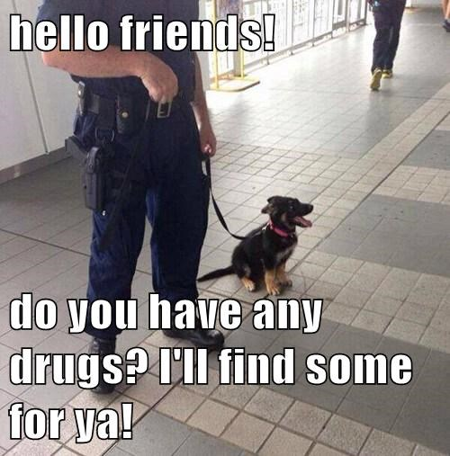 cute cops puppies drug dog