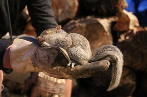 cute,sleeping,squirrel