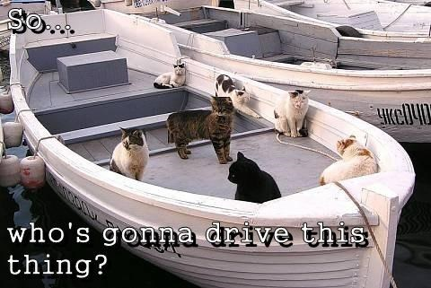 sea cute Cats boats - 8162543360