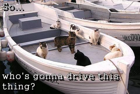 cute Cats boats - 8162543360