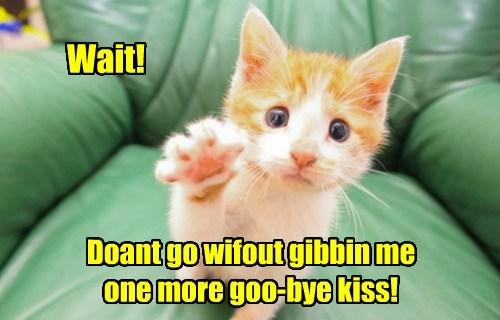 Home Alone cute Cats - 8162572544