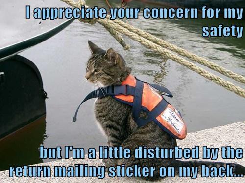 Cats funny life jacket boats - 8162586624