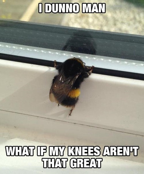 old knees puns bees funny