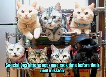 military sleep Cats team - 8163098880