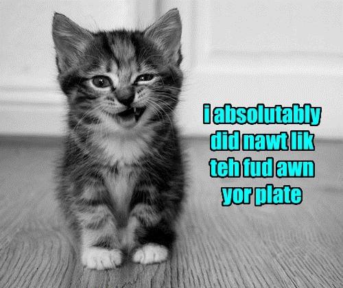 kitten cute noms beg Cats funny - 8163203840