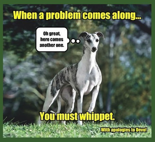 Devo,dogs,puns,whippet,featured user