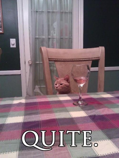 Cats,classy,fancy,funny