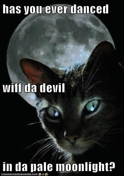 Has You Ever Danced Wiff Da Devil In Da Pale Moonlight Lolcats