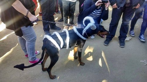 houndoom,cosplay