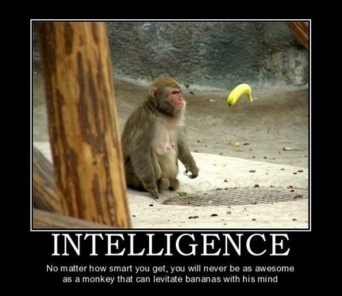 levitation intelligence monkey funny - 8165085952