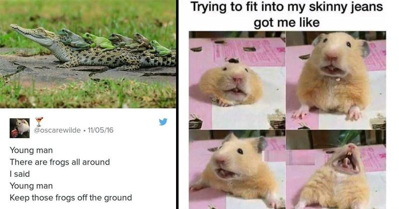 twitter tumblr random memes funny memes funny tweets animal memes animals - 8165125