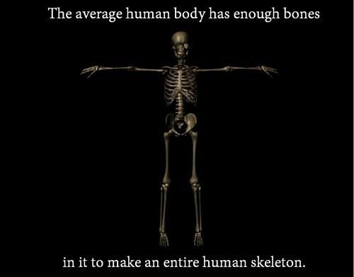 anatomy bones human body - 8165257728