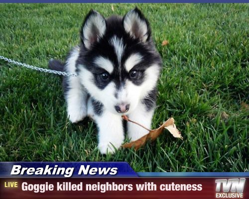 puppies,cute,Breaking News