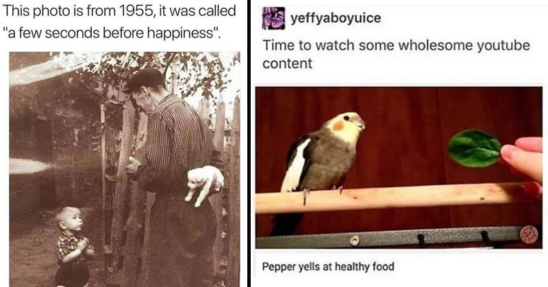 uplifting memes like a vintage photo of a boy about to get a puppy and a still from a video of a cute parrot