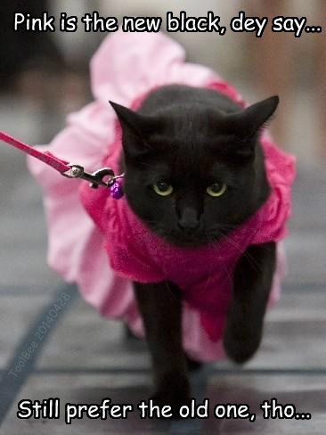 black cats,pink,fassion,Cats