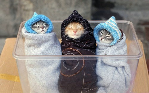 kitten,snuggle,cute,bundled