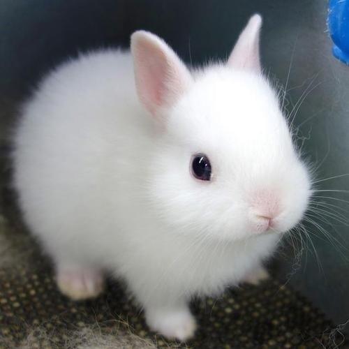 bunnies Fluffy cute - 8166177280