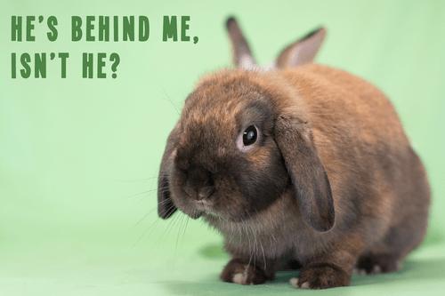 photobomb bunny ears funny rabbits - 8166182400