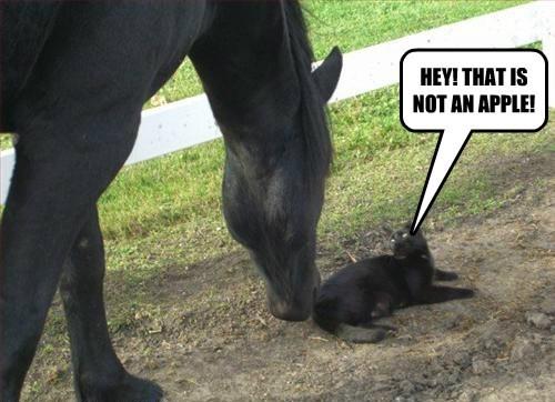 Cats funny horses - 8166348544