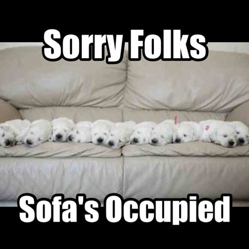 cute,dogs,puppies,seat