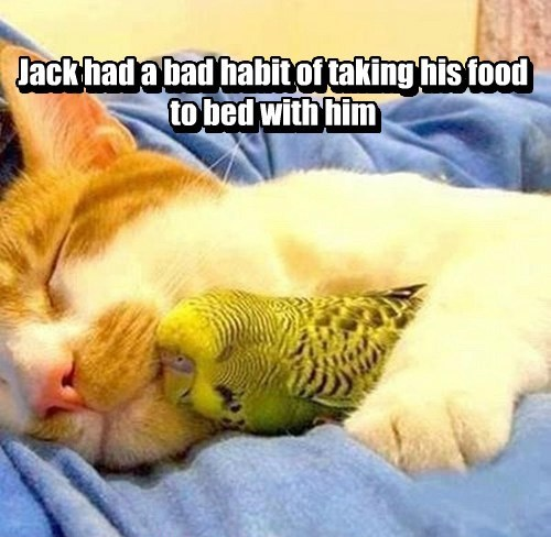 cuddles,bird,food,Cats