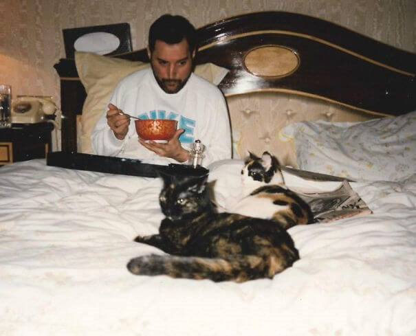 freddie mercury photos Cats - 8166661