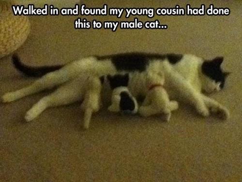 Cats kids parenting - 8166681600