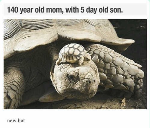 hat kids tortoise parenting poorly dressed - 8166687488