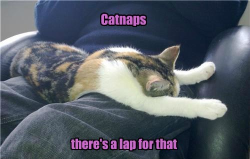 Cats catnip apps snuggle - 8166725120