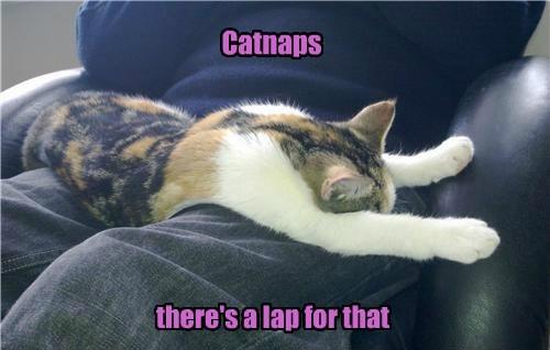 Cats catnip apps snuggle - 8166725120