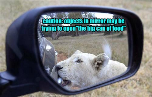food lions mirror scary - 8166735616