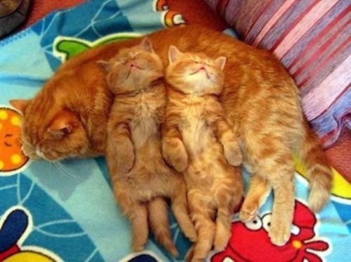 Pillow kids kitten parenting Cats sleeping - 8166747648