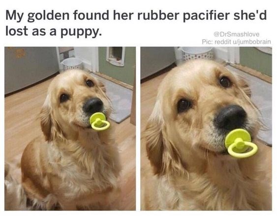 Babies pets pacifier animals - 8166917