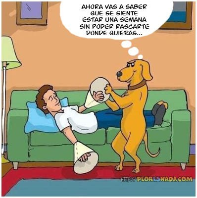 bromas viñetas perros animales - 8166947584