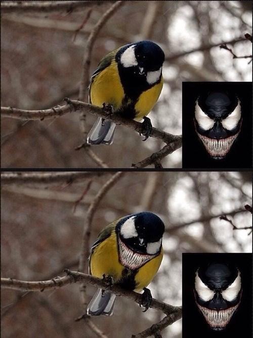 birds,Venom