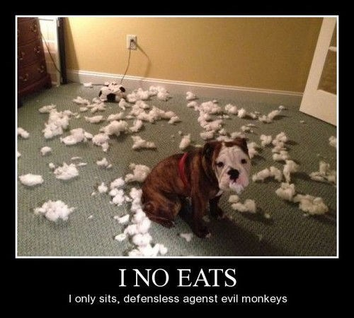 Pillow dogs destruction funny