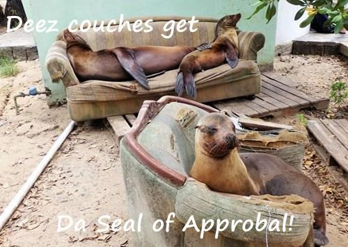 couch puns seals - 8167035904