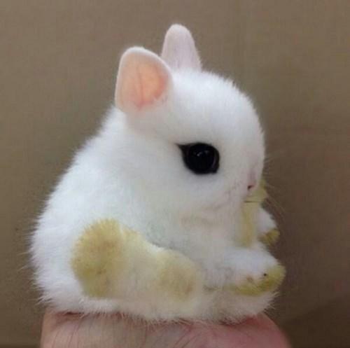 bunnies cute fuzzy - 8167061248