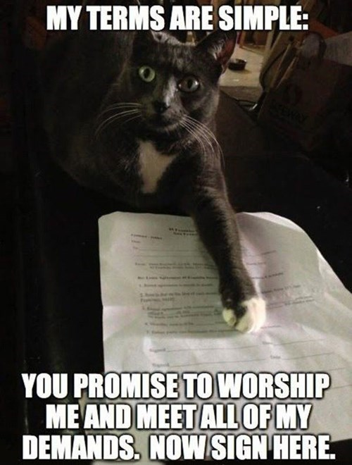Like a Boss,contract,Cats,funny