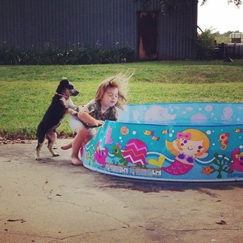 kids,push,funny,puppies,pool