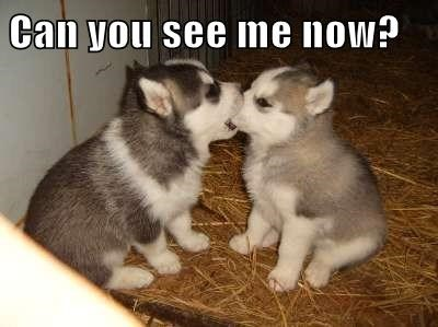 dogs eye test funny puppies - 8167133952