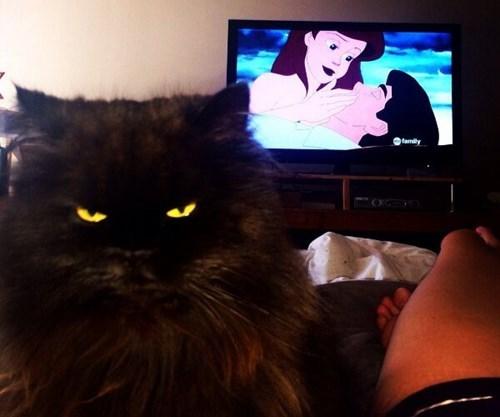 Cats disney - 8167152640