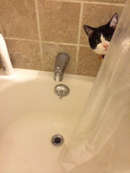 Cats,funny,sneaky,shower