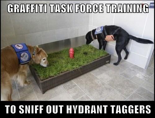 dogs,graffiti,training