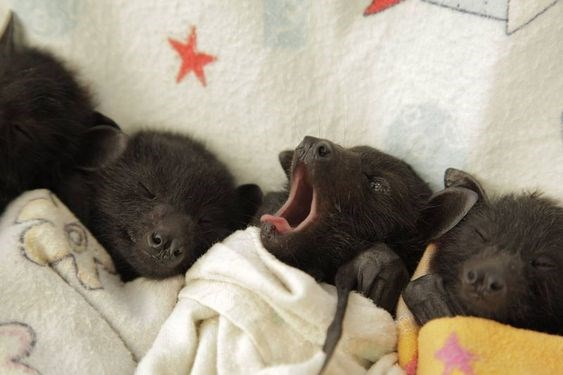 aww baby bats photos cute - 8167429