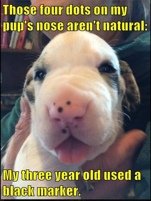 cute children puppies - 8167483648