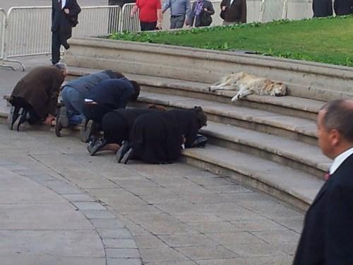 perros curiosidades animales fotos - 8168133120