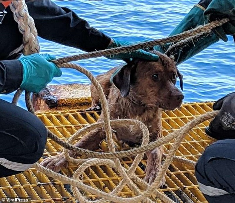 dogs swimming lost at sea thailand rescue - 8168453