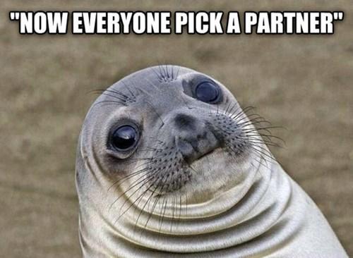 awkward seal school awkward situation seal - 8168478720